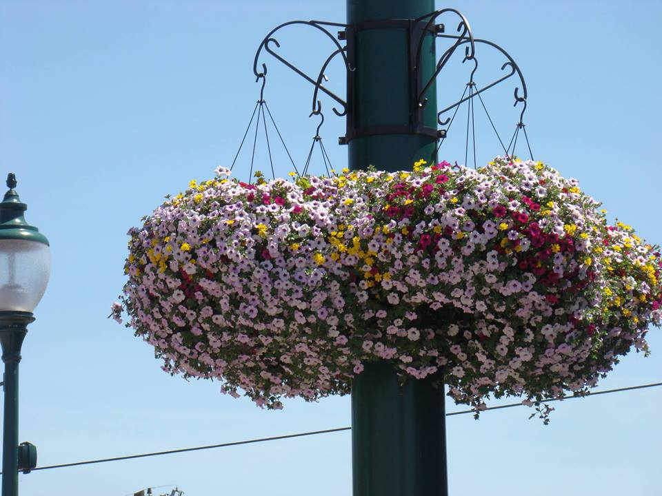 Award-winning flower baskets